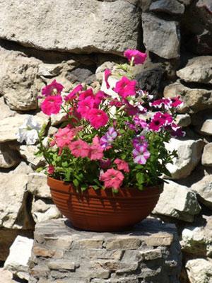 doniczki do kompozycji kwiatowych